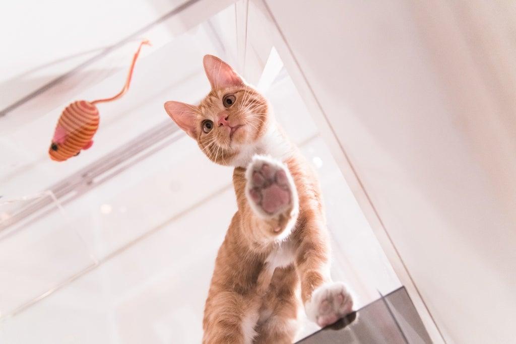 Fresh Step Brand Puts Cats On Glass Good Growth Blog